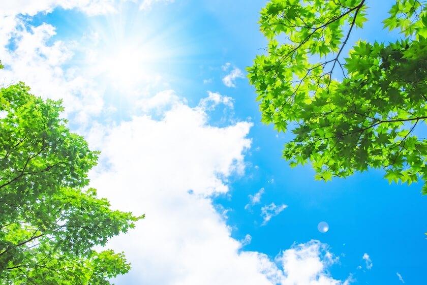 緑と青空と太陽