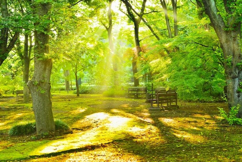 木漏れ日が差し込む早朝の公園