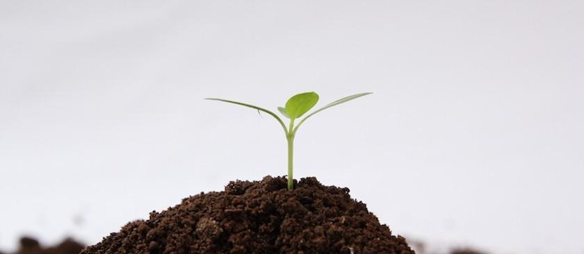 新芽と盛り上がる土